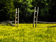 the yellow field (-gregg-) Tags: city field st yellow fence maryland marys