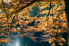 Overhang - Fuji Pro 400H (magnus.joensson) Tags: autumn nikon fuji sweden swedish pro nikkor nikonfe ais 400h sdersen fujipro400h 2550mm