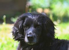 Meine kleine Hündin Mia (magic_lightblue) Tags: dog hund haustier