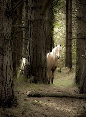 Light amid the darkness (Jo Evans1 - trying to catch up) Tags: light pine forest point darkness pony gower marsh whiteford
