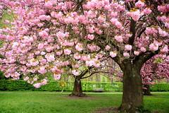 IMG_4586 (Irina Souiki) Tags: parcdesceaux france paris sceaux flowers nature parc park