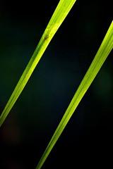 Leaf lines (Deb Jones1) Tags: park light macro green nature beauty leaves canon garden palms botanical outdoors leaf flora flickrduel debjones1