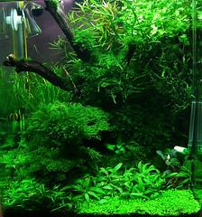 ... cube blau nano aquascape aquaristik 30l aquascaping dennerle garnelen