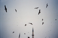 03190025 (Evgeny Chulyuskin) Tags: trip travel sky snow color film 35mm turkey minaret seagull super ps istanbul scan negative yashicat5 t5 snowing yashica compact t4 noritsu kodakprophoto100xl