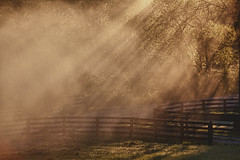 Morning Sun and Fog (mynewpicture) Tags: morning sun fog kentucky countryroad mygearandme mygearandmepremium mygearandmebronze mygearandmesilver mygearandmegold mygearandmeplatinum mygearandmediamond klausficker galleryoffantasticshots flickrstruereflection1 flickrstruereflection2 flickrstruereflection3 flickrstruereflection4 flickrstruereflection5 flickrstruereflection6 flickrstruereflection7