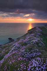 Pinks at Sunset (@Gking_photo) Tags: flowers sunset sea sky plants nature water clouds landscape photography coast imac coastal thrift coastline