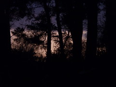 An evening like this (llovmaartje) Tags: trees sunset nature dutch silhouette forest dark landscape evening warm nacht colorfull romantic bos schaduw afternight ondergaan