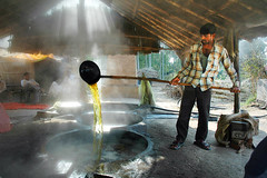 Hot golden and Sweet - Making jaggery at Chhutmalpur (Anoop Negi) Tags: india tom photo factory juice photojournalism sugar worker alter making anoop dehradun pradesh unit negi sugarcane uttar molasses gur jaggery saharanpur uttarakhand pphotography tomalter chhutmalpur