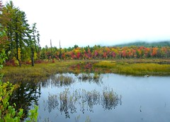 Autumn Landscape (Stanley Zimny (Thank You for 16 Million views)) Tags: park autumn trees lake reflection tree fall nature colors leaves automne catchycolors leaf pond colorful colours seasons mud natural fallcolors herbst newengland newhampshire nh autumncolors fourseasons autunno autumnal colorexplosion 4seasons otono northconway sgis ahorn naturephotos jesien natureimages jesiennie