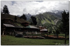 Fairy meadows (zafaryaab) Tags: travel pakistan mountain flower girl beautiful rose photography fort sony lakes palace shangrila area gb northern rakaposhi hunza baba yasin rama nagar diran passu gilgit tattu saifulmaluk baltit altit naltar deosai nangaparbat skardu baltistan sadpara astore fairymeadows kachura sheosar babusar satpara ishkoman lulusar godai ghizar punyal borith khaplu chilim ghanche hoopar atatabad