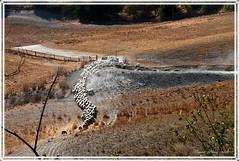 ... IL SERPENTONE (mauro855) Tags: italia siena toscana 2012 cretesenesi asciano nikond60 abigfave torreacastello mauronizzi mygearandme