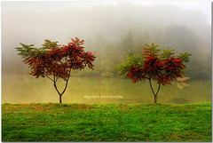 (tozofoto) Tags: autumn trees lake water colors fog forest canon landscape lights hungary shadows zala tozofoto