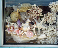 Shell shop window (The LMMA Network) Tags: shells coral shell jewelry tourist sell trinket