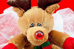 extreme close-up of a cute teddy bear (alexphotos8877) Tags: birthday bear christmas xmas winter vacation stuffedtoy holiday cute festive toy religious photography stuffed shiny doll december display sweet anniversary decoration fluffy nobody nopeople celebration indoors event gift teddybear surprise present manmade studioshot thorn decor occasion displayed religiouscelebration packed softtoy traditionalculture christmaspresent displaying christmasgift wrappingpaper giftbox redbackground colorimage fragility manmadeobject toyanimal christmasgiftbox animallikeness publiccelebratoryevents