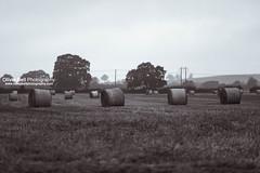 Harvested - Day 116/365 (Olivia L'Estrange-Bell) Tags: harvest straw hay bales strawbales harvesting endofsummer harvested endofharvest
