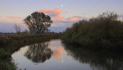River Reflections #4 (Jonny Hirons) Tags: uk greatbritain pink blue sky moon colour reflection tree water beautiful horizontal clouds river landscape outdoors reflecting scenery widescreen yorkshire peaceful tranquility symmetry meditating symmetrical serene riverbank northyorkshire tranquilscene 16x9 likeamirror riverderwent beautyinnature twohalves dividingline 16by9 romanticsky