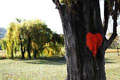 ILoveThatTree (MartinJ-N) Tags: streetart tree heart poland höst warszawa