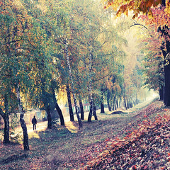 Path of Gold II (Tanjica Perovic) Tags: morning november autumn trees light red sunlight mist cold green fall nature leaves yellow misty fog backlight walking square person photography gold vanishingpoint haze child path perspective foggy quay step squareformat impressionist atmospheric fallenleaves birchtrees srbija floodbarrier pirot autumnalscene canoneos400d sigma1770mmf2845dcmacro фотографија solitaryperson pirotskikej кејнанишави pirotserbia pirotkej pirotsrbija tanjicaperovicphotography fotografijepirota barrieragainstflooding svetozarmisirlic floodingprotection