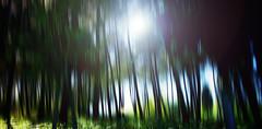 Forest (Caucas') Tags: sinop forest wood woods orman green surreal sun tree blacksea nikon d7000 nikkor 35 mm f 18 g caucas kafkas mgkafkas city şehri ormanı ağaç landscapes turkije turquia σινώπη digital anadolu mer noire sinope sinuwa turkei turkey turkish türkei türkiye sky trees photoscape sight rays shine brights сюрреалистичный nyata surreale surrealista surréaliste forêt bosque foresta