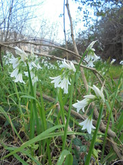 680 (en-ri) Tags: verde grass sony erba bianco fiorellini sonysti