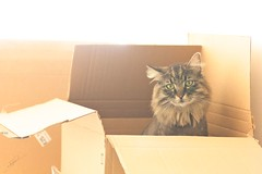 Amazon: my cat's best friend (Jorgepevet) Tags: light sun cat amazon box move caja gato browns mudanza sunnyday marrones