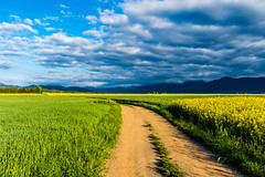 Where We Go ? (Cristian-Z) Tags: road morning blue trees naturaleza sunlight green beautiful yellow clouds walking landscape landscapes nikon scenery shadows camino path exploring beautifullight naturallight paisaje catalonia catalunya nikkor naturalworld sundays naturephotography exploracion natureimages