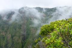 Honopu Trail Lookout (bruzasd) Tags: hawaii coast lookout trail kauai napali 2016 honopu