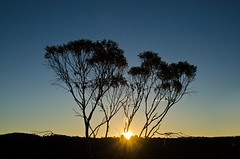 (mblaeck) Tags: sunset sky sun tree nature silhouette outdoor dusk serene behind lanscape katoomba sunsetting behindtree sunsettingbehindtree