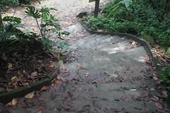 A tropical rainforest in Rio de Janeiro, Brazil (eltpics) Tags: brazil riodejaneiro rainforest path steps down tropical lookingdown eltpics