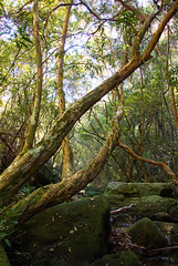 Aussie forest: not a straight line in sight... (Jutta Sund) Tags: creek moss