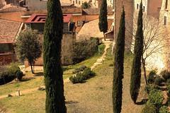 IMG_9019 (aexitwounds) Tags: barcelona trees spain catalonia girona espana catalunya cataluna