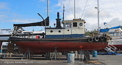 9824_Adaline (lg evans Maritime Images) Tags: tugboat tug lge adaline seattlewa onthehard lgevans maritimeimages ©lgevans seaviewwest
