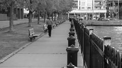 106crpshsatbwaconfwl (citatus) Tags: park summer bw toronto canada man dan way walking evening pentax pedestrian ii edge waters harbourfront k3 2016 leckie