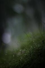 (Ken Marten) Tags: mist fog wales forest woodland moss cymru spiderweb grasses ferns temperaterainforest mistymorning explorebritain sombrescapes