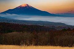 Venus belt of the morning (shinichiro*_back) Tags:    jp 20160107ds23019 2016 crazyshin nikond4s afsnikkor2470mmf28ged fuji lakeyamanaka yamanashi japan january winter candidate