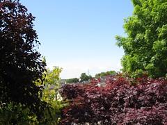 1483 Village view (Andy panomaniacanonymous) Tags: 20160530 aaa acer ashtree garden japanesemaple jjj mmm sky sss trees ttt village vvv