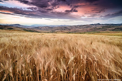 Spighe (archisal) Tags: red sky italy nature field clouds sunrise landscape nikon europe italia alba explore naturereserve d750 sicily rosso sicilia grano spighe grainfield zf2 distagont2821 parcodeimontisicani nikond750