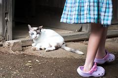 Curiosity (Yuta Ohashi LTX) Tags: girl japan cat nikon f14 voigtlander  fixed  58mm nokton  focal  d90 primelens