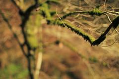 Moss (Luke_23) Tags: brown blur tree green nature canon 50mm moss branch dof bokeh 7d mossy