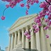 Springtime in Washington, DC