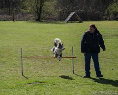 Hundesport 01.04.2012