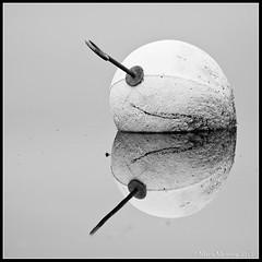 Reflection (mmoborg) Tags: sweden sverige mmoborg mariamoborg