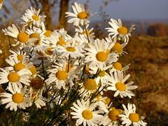 (Arkadious) Tags: november autumn nature forest meadow poland polska lanscape lodz d krajobraz lodzkie pejza dzkie