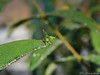 Grasshopper 30.06.2012