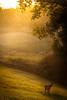A Good Start To My Day (explored) (Kevin Rodde Photography) Tags: nature sunrise canon deer 500d illis rodde volumetriclighting godsrays sublimemasterpiece t1i cedruseternum kevinrodde circumspecular springbrookparkitasca kevinroddephoto kevinroddephotography