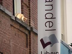 Curious Cat (indigo_jones) Tags: holland building brick window netherlands wall cat ginger kat utrecht nederland bookstore curious marmalade raam libris servetstraat boekenhandel