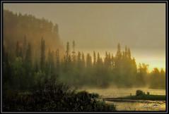Misty river (pekka.nikula) Tags: autumn mist water fog creek finland river nationalpark rapids kuusamo usva sumu aamu kitka karhunkierros oulanka phknnkallio
