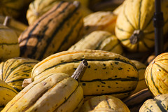 Delicata (Nataraj Metz) Tags: thanksgiving park autumn food naturaleza fall nature closeup automne germany pumpkin deutschland healthy essen europa europe eating patterns pumpkins herbst natur harvest natura fresh health crop environment otoo cosecha diet muster deu spaghettisquash erntefest ludwigsburg nahaufnahme sant erntedank erntedankfest pumpkinfestival krbisse nutrition krbis ernte umwelt harvesting frisch wintersquash moisson calabazas harvestfestival gesundheit badenwrttemberg frico gesund cucurbitapepo cucurbita sanidad courge nutricin blhendesbarock ernhrung krbisausstellung  cobranza delicatasquash pumpkinexhibition fiestadelacosecha ftedelarcolte moissonage