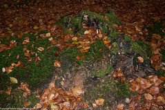 Moss covered Trunk (Robert Wilson Photography) Tags: flash treetrunk mossbank greatwood