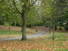 Autumns Carpet. (BIKEPILOT) Tags: autumn trees leaves carpet colours hampshire aldershot municipalgardens